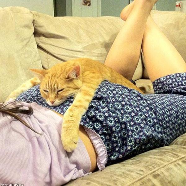 Кошки выбирают место для отдыха