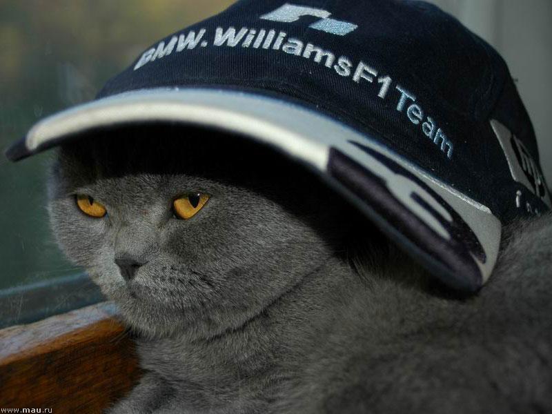 Открытка, картинки прикольные коты в кепках