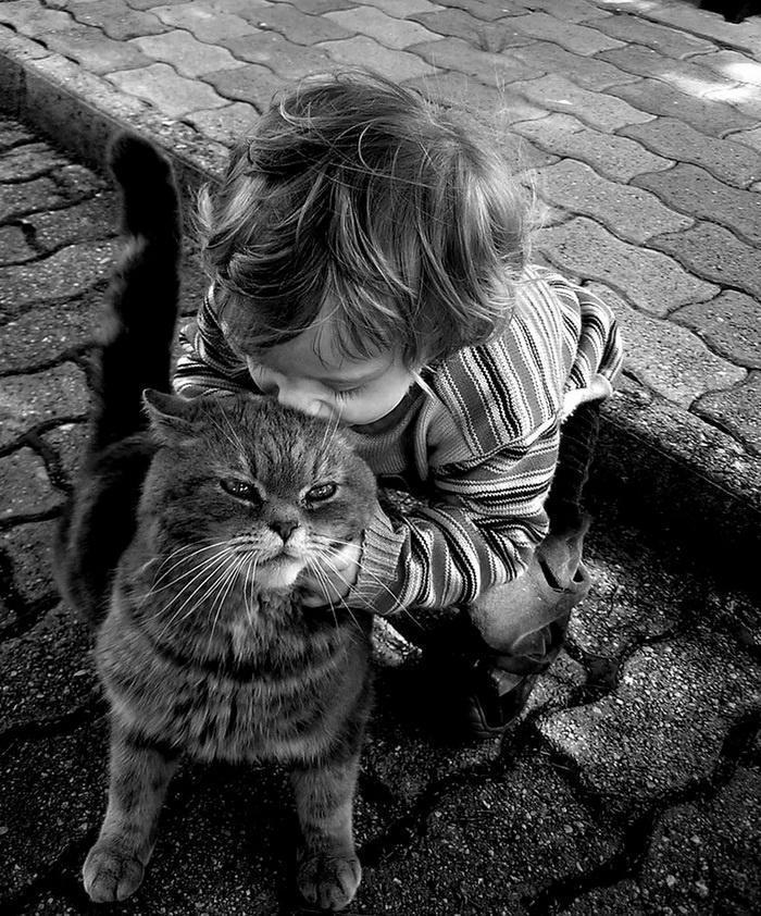 черно белое фото кошек и людей последнее