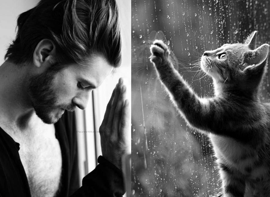 парень с кошкой картинка лента представляет
