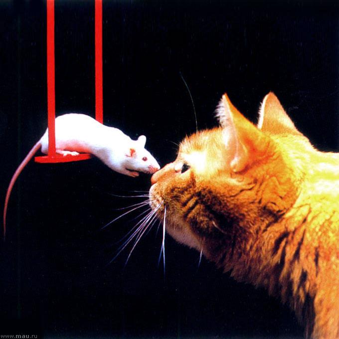 Мышь и кот смешные картинки