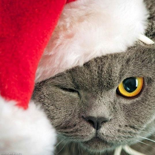Усатые Деды Морозы