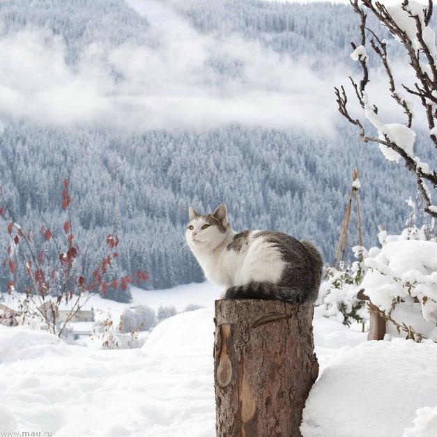 Что делают кошки зимой