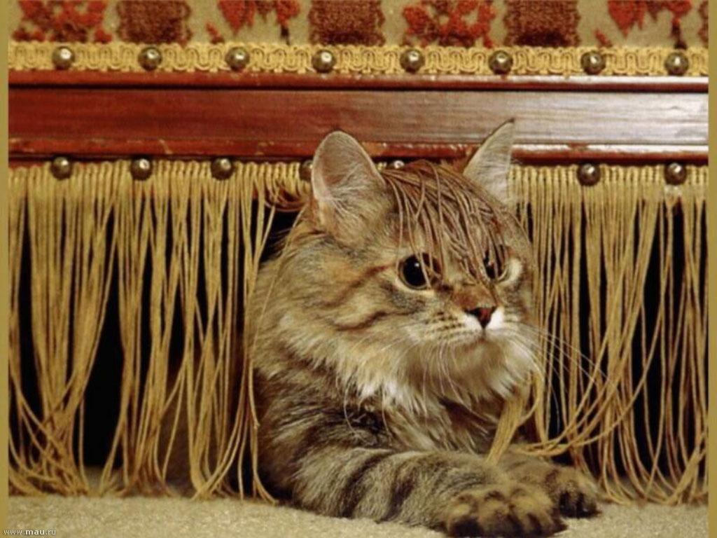 Классные картинки котят и щенят