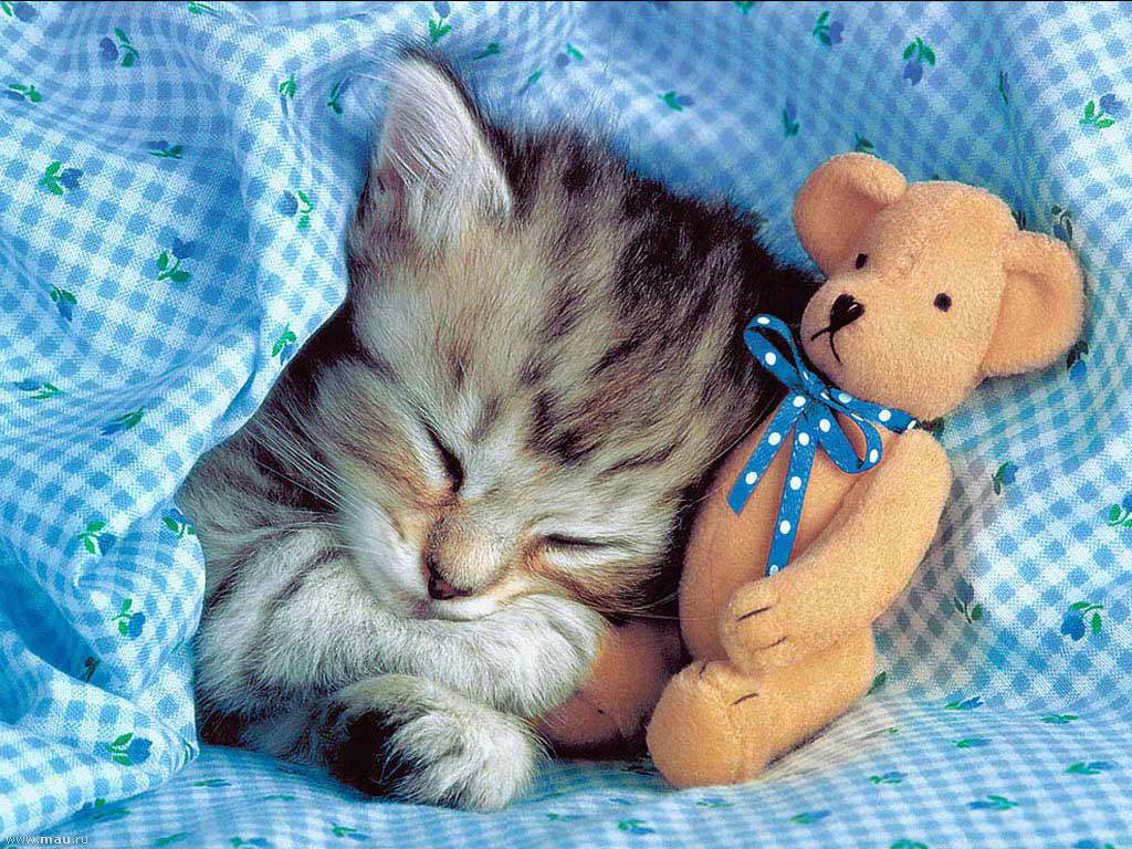 врачу картинки спящие котята фотокартинки, вот это