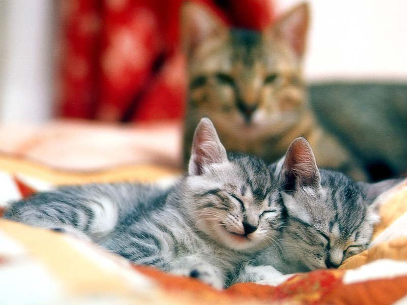 лишь кошка с котятами двумя фото разработана специально