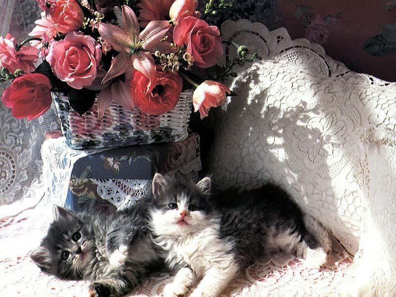 Красивые открытки котики и розы, войне